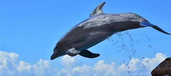 10 cosas que no sabías de los delfines: Dolphinaris