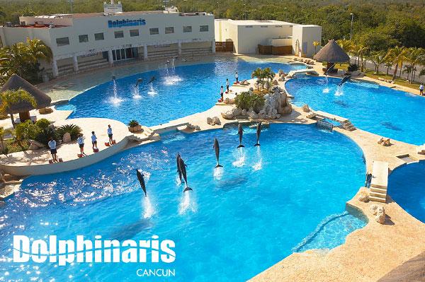 15 mejores lugares para nadar con delfines en el mundo en Cancún