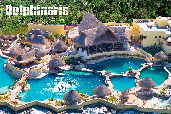 15 mejores lugares para nadar con delfines en el mundo [dolphinaris-cozumel]