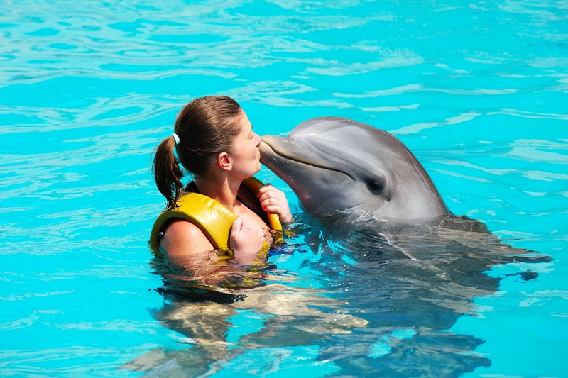 Swimming with dolphins are a great choice in Cancun