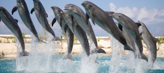Características sobre delfines