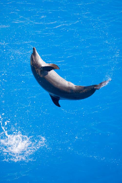 Descubre las características de nadar con delfines