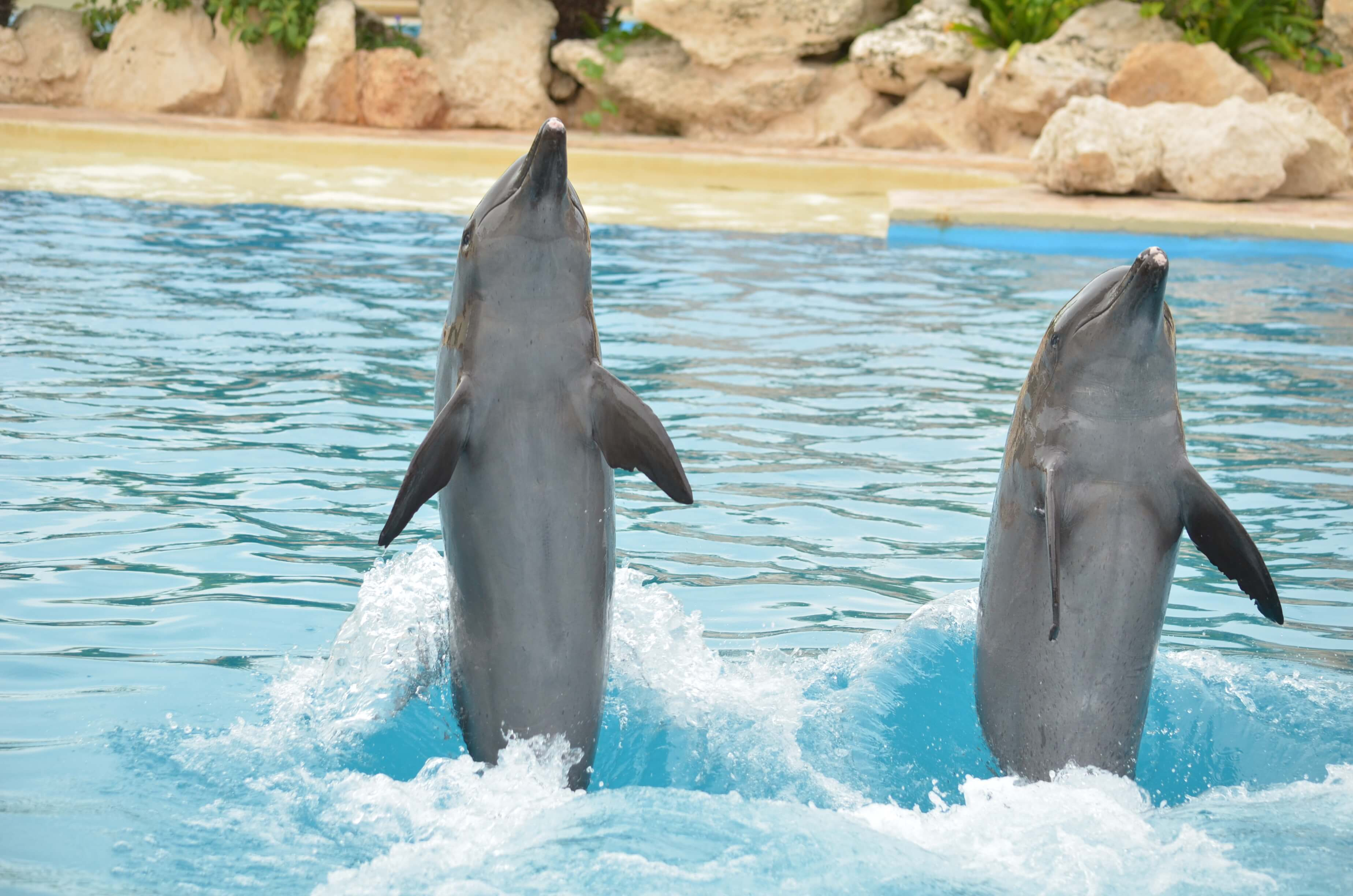 Disfruta del nado con delfines en Cancún en Dolphinaris.