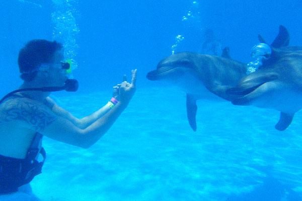 Buceo con Delfines Riviera Maya