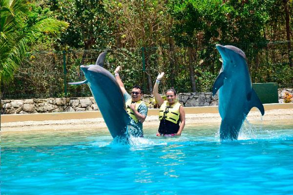 Instrucciones para el delfín