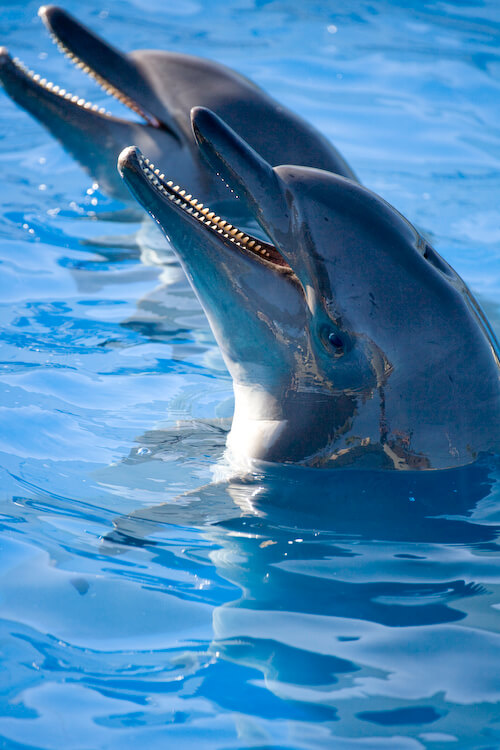 Where go swimming with dolphins? Dolphinaris has six locations!