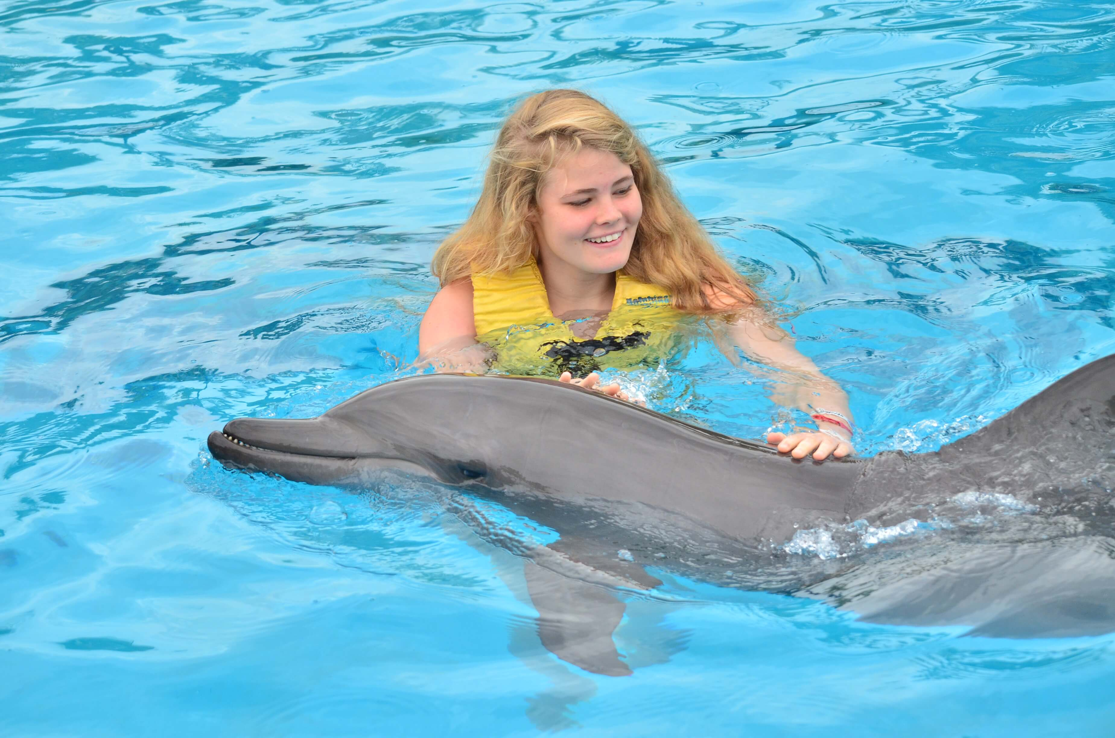 Where to go swimming with dolphins at Riviera Maya