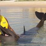 Aventura Tripla programa nado golfinhos em Riviera Maya Mexico - interactuar.