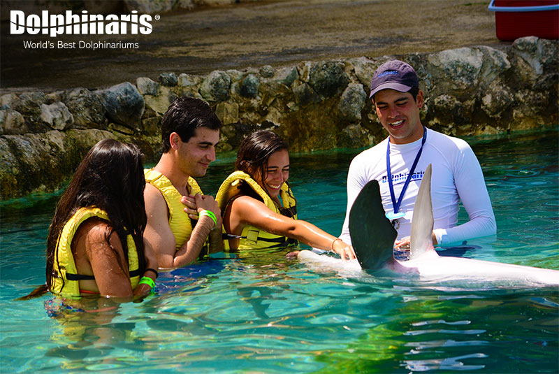 Become a dolphin trainer at Dolphinaris Cozumel!