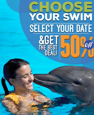 Book your dolphin swim get the best deal