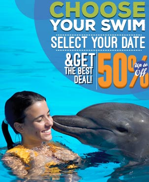 Book your dolphin swim and get the best deal at Dolphinaris
