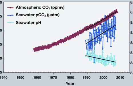 co2 and ph levels in ocean graph diagram-Consequences to Ocean Acidification - Dolphinaris in Cancun