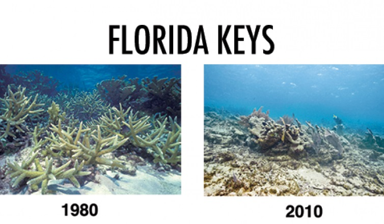 coral reefs in florida keys 1980-2010-Consequences to Ocean Acidification- Dolphinaris in Tulum
