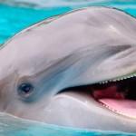 Dolphianris programa nado carona golfinho.