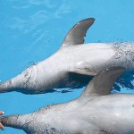 Dolphin care at Dolphinaris