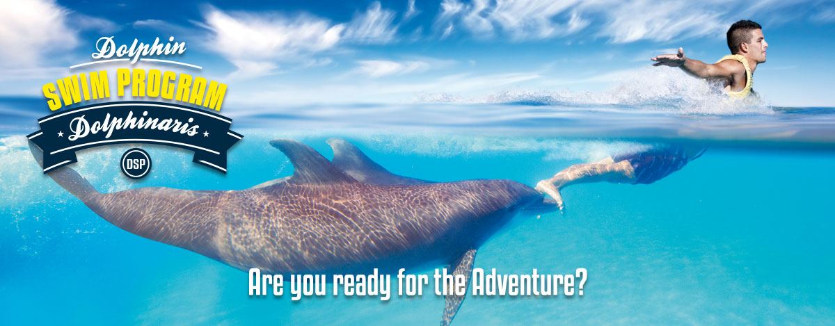 Swim with the dolphins Foot Push - Dolphin Swim Program in Dolphinaris