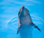 Dolphin swims reviews Cancun, Riviera Maya, Tulum and Cozumel