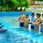Become a dolphin trainer for a day!
