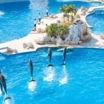 Nada con delfines en Dolphinaris Cancún.