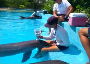 dolphinaris foundation research pneumotachometer