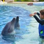 Inolvidables momentos con los asombrosos delfines.