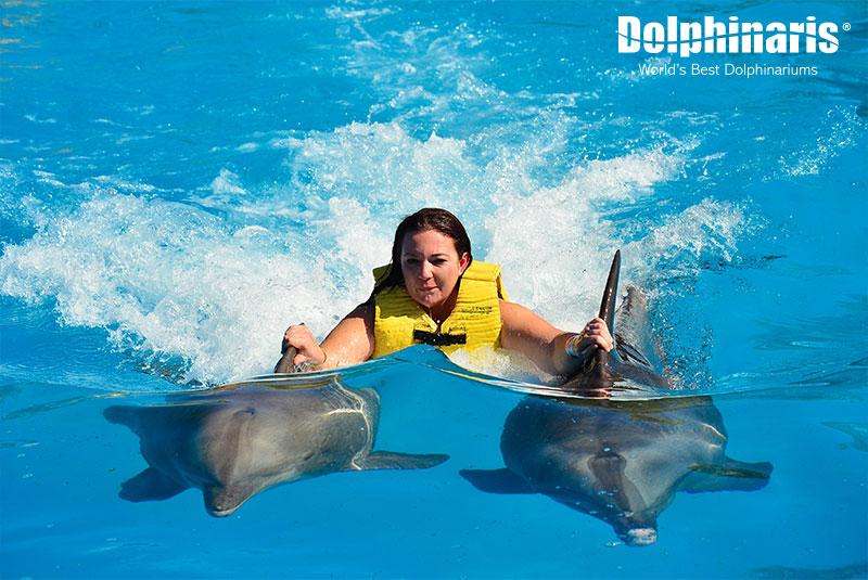 Actividad del Dorsal Ride nadando con delfines.