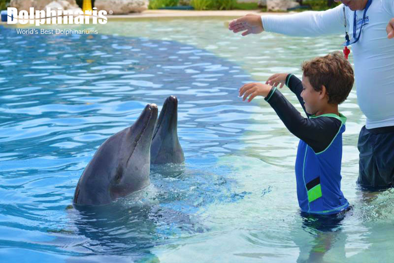 Great dolphin interaction at Dolphinaris Cancun.