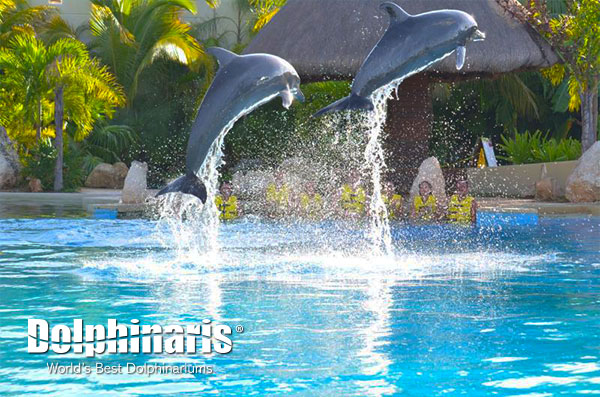 The Dolphins can launch themselves up to 15 feet out of the water! Impressive huh?