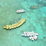Jungle Tour Aquaworld snorkel tour Punta Nizuc arrecife mas programa nado con delfines.