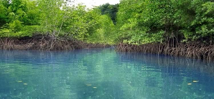Jungle tour en Cancun