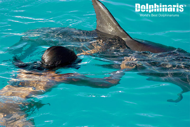 Learn about dolphins with a diving mask!