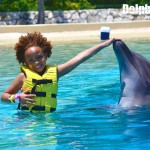 Magical interaction with dolphins.