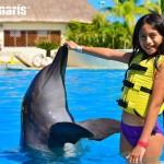 Momentos mágicos en la interacción con delfines.