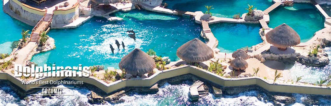 Nada com golfinhos em Dolphinaris Cozumel Mexico