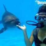 Nadando con delfines, actividad de Buceo.