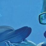 Nadar com golfinhos - Treinador por um dia - atividade de mergulho