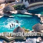 Nadar con delfines en Dolphinaris Cozumel.