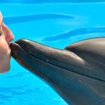 Nadar con delfines Entrenador por un día beso de delfin