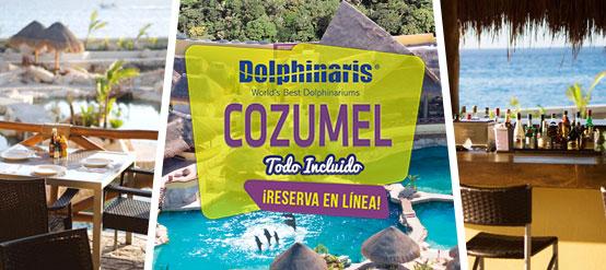 Nada con delfines en Cozumel México con alimentos y bebidas ilimitadas.