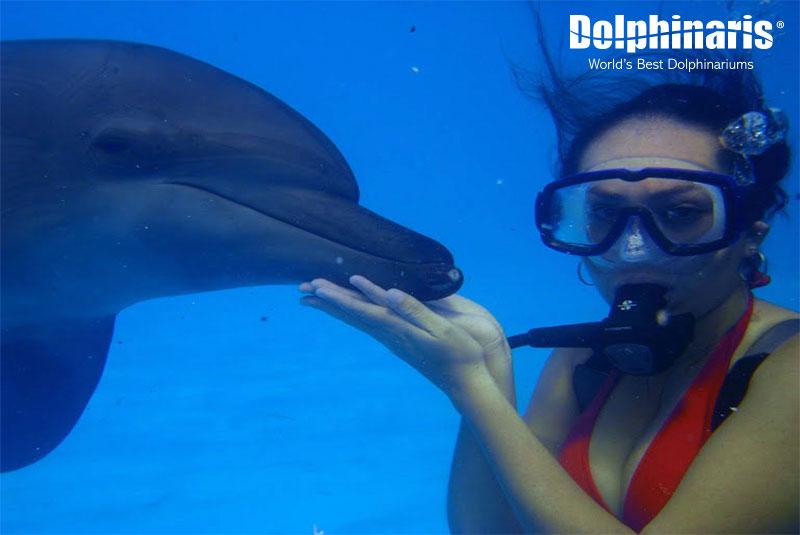 Programa de Entrenador de Delfines, actividad de buceo.