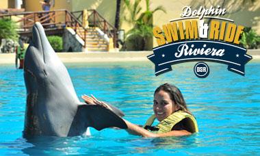 Nadar con delfines en Semana Santa en Riviera Maya - Programa de nado e interacción con delfines.