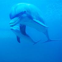 Delfines bajo el agua, reseñas TripAdvisor