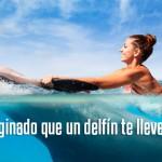 Programa de nado con delfines Dolphin Swim Ride.