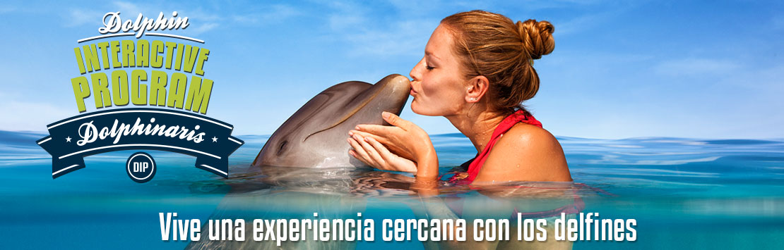 Programa Interactivo con Delfines. Cancun, Tulum, Barcelo and Cozumel.