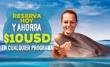 Reserva hoy mismo y ahorra 10 USD en tu nado con delfines.