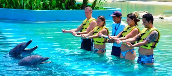¡Sé un entrenador de delfines por un día!