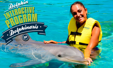 Swim with dolphins in Cozumel - Dolphin Interactive Program