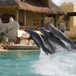 Swim with dolphins program Cozumel.