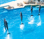 Swim with dolphins reviews Cancun, Riviera Maya, Tulum and Cozumel