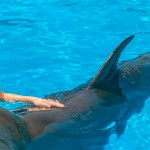 Swim with Dolphins in Riviera Maya